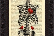 Anatomical Print