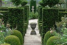 Garden - Topiary & Hedges