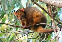 Australian wildlife / Australian animals that i got to see. / by Alessio Bertolino