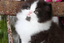Adorable animals / All creatures great and small