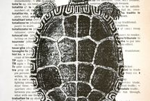 chelonian  / by Lisa Roberts