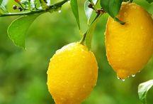 limonero cuatro estaciones