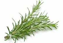 Herbs/cardning/plants