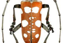Insecta Насекомые