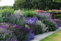 Yellow and blue herbaceous border