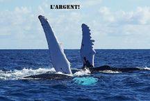Baleines Anges Marins