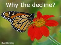 Pollinators and Pollinator Plants