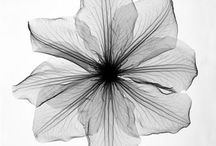 X ray flor