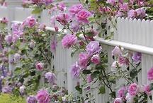 Garden/Gardening