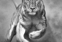 1. Tiere/Katze/Tiger etc. Zeichnungen