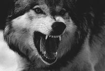 Wolfie ❤️
