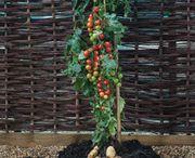 Jardinage / découvrez toutes les chroniques radio, conseils et astuce pour un jardin ou un potager bio