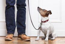 Dog Training /