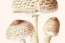 Mushroms