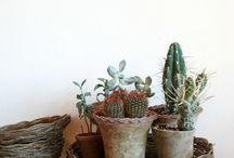 plantas / Plantas y macetas