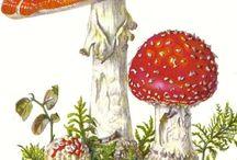nature/illustrations