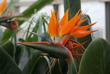 Natur / Wunderschönen Blumen.