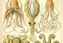 octopus et meduses