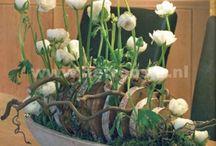Oggettistica floral
