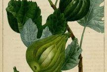 Matières premières parfumerie / Planches aromatiques, photos de matières premières