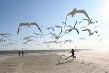 Ahhh the Beach / by Wanda Lakey
