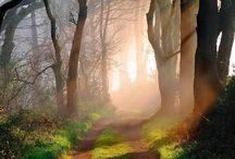 Luonto valokuvaus, nature Photography
