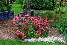Byliny Słońce / Piękne byliny do słonecznego ogrodu