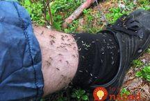 Na komáry
