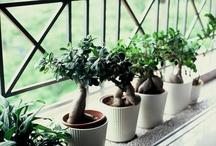Tiny Trees / by Fairy Gardening