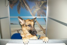 Kennelwood Boarding / by Kennelwood Pet Resorts