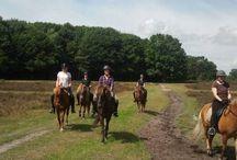 Patty Casander - Vind je Buitenrit / Hier vind je alles over het buitenrijden met paarden!   www.vindjebuitenrit.nl