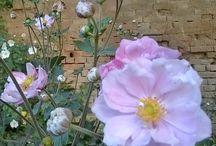 Ispirazioni - flora / Immagini della natura che hanno ispirato alcune mie creazioni