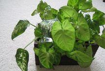 ガーデニング・植物