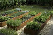 Kruiden Oranjeburgh plantsoen