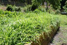 Garden & Lawn down home / by Christine LovestoRide