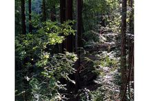 Butano State Park / by CA State Parks
