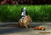 Hahahah..Giggles / by Kirsten Jones