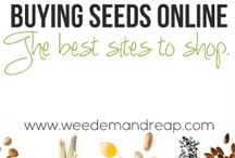 씨앗 seed/bean