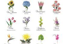 Flor de corte