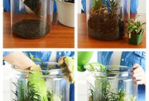 Plant ideas and terrarium