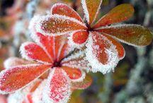 Frozen /Frost