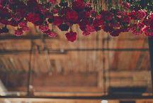Window Ideas - Flowers