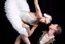 marchen swan