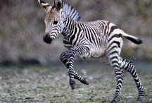 Animals / by Kadee Bonds