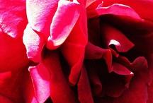Reds / by Judy Ditchfield