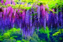 Trees and Flowers / Amazing trees and beautiful flowers