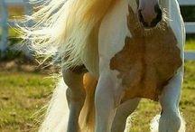 Horse photo.