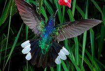Ecotourism / Hummingbird Ecotourism