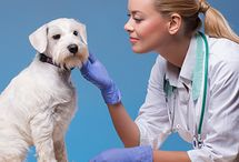 Animal Course / Animal Care Courses available through The Course Mix https://www.thecoursemix.co.uk/course-category/animal-courses/