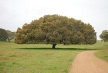 Árvores / Árvores de Portugal